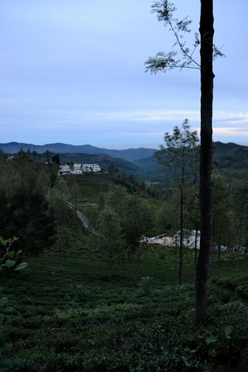 Morgon i Kotagiri och vy över en teodling.